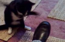 強烈猫パンチを放つ猫