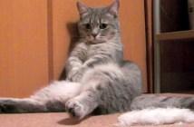 暇そうでお腹をポンポンする猫