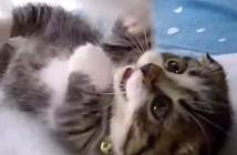 子猫の連続猫パンチ