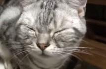 タマネギで泣く猫