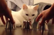 ボール当てをする猫