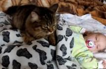 赤ちゃんを寝かしつける猫