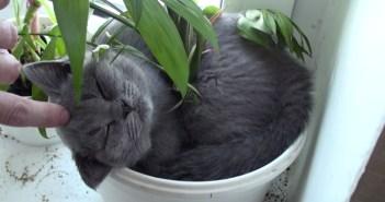 鉢植えで丸くなって眠る猫