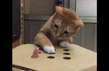 モグラたたきをする猫