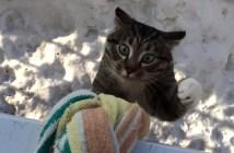 ロープをよじ登って帰宅する猫