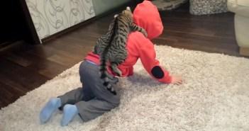 男の子の背中に乗る猫
