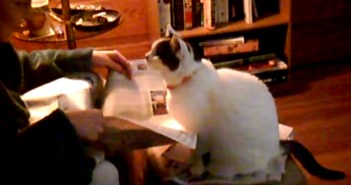 新聞にヤキモチを焼く猫