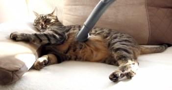 掃除機に吸われてご満悦の猫