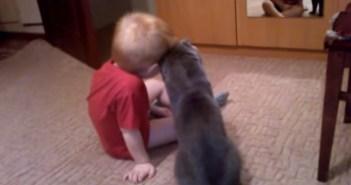 少年に寄り添う猫