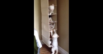 クローゼットで遊ぶ子猫