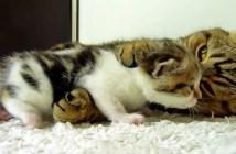 だっこする母猫