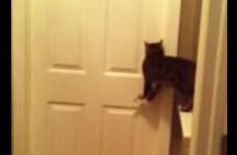 ドアを開けてあげる猫