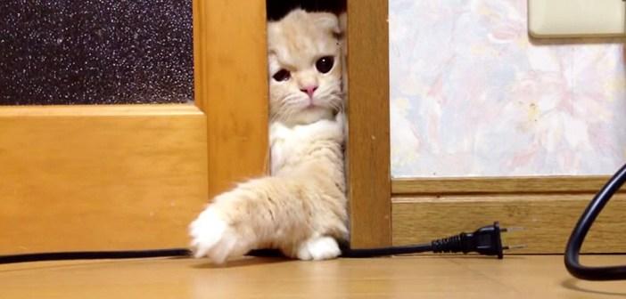 部屋の中に入りたい猫