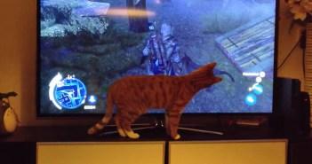 テレビゲームの犬に夢中の猫