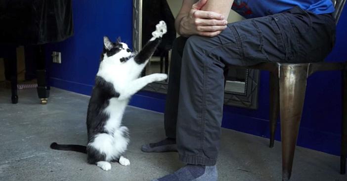 ご主人が大好きな猫