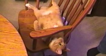 イスの肘掛けで回転する猫
