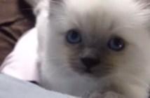 キャッキャッと鳴く子猫