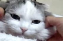 真顔でマッサージされる猫