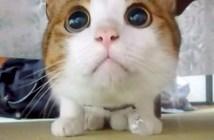 目がまん丸になる猫