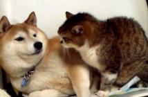 シュンとなる犬