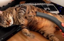 掃除機に吸われて気持ちよさそうな猫