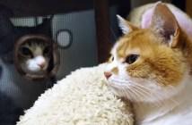 猫パンチされて顔が固まる猫