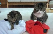 クッションをフミフミする猫