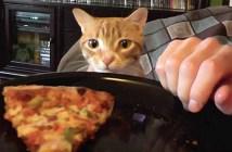 ご飯が食べたい猫