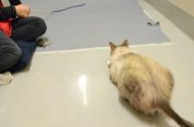 猫じゃらしを狙う猫の動きが面白い