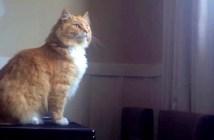 窓辺にジャンプする猫