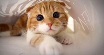 紙袋の中の猫