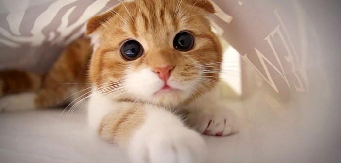紙袋の中で目をクリクリさせながら遊ぶ猫。元気いっぱいの姿が可愛すぎる (〃∇〃)♡