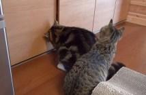 猫の手を借りる猫