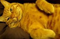 眠たいけど我慢する猫