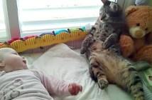 赤ちゃんにオロオロする猫