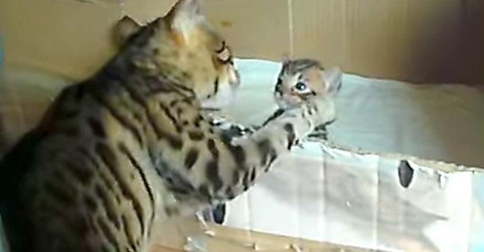 子猫を応援する猫