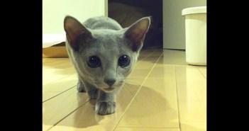 近づいてくる子猫