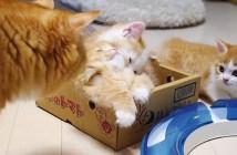 子猫のピンチに駆けつける母猫