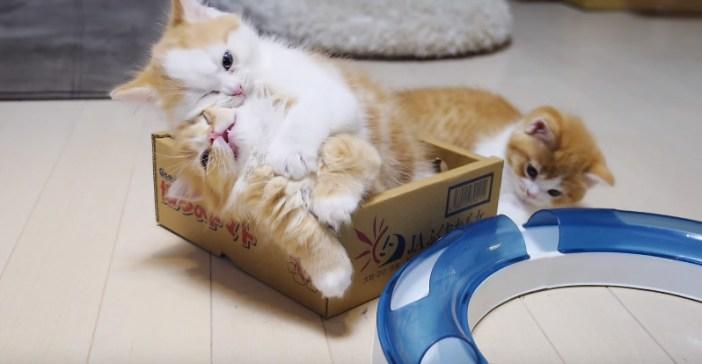 力が入りすぎた兄弟猫