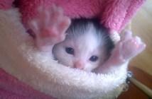 ポケットの中でバンザイする子猫