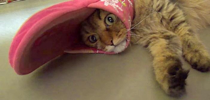 スリッパ猫