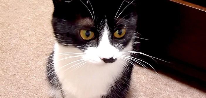 とぼける猫