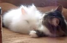 ウサギが大好きな猫