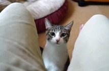猫を呼ぶ方法