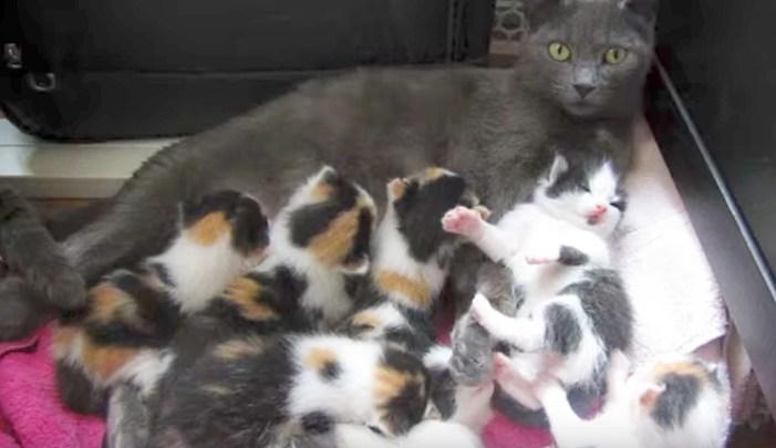 たくさんの子猫と母猫