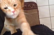 出かけようとする飼い主さんを止める猫