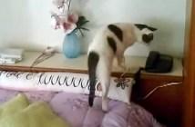 denwa_cat