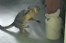 ゴミ箱のフタと格闘する猫