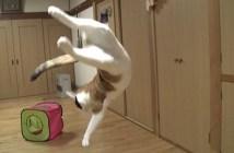 ジャンプする猫がかっこいい