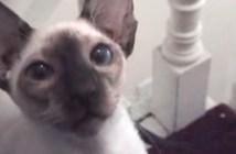コミカルな動きで階段を上る猫